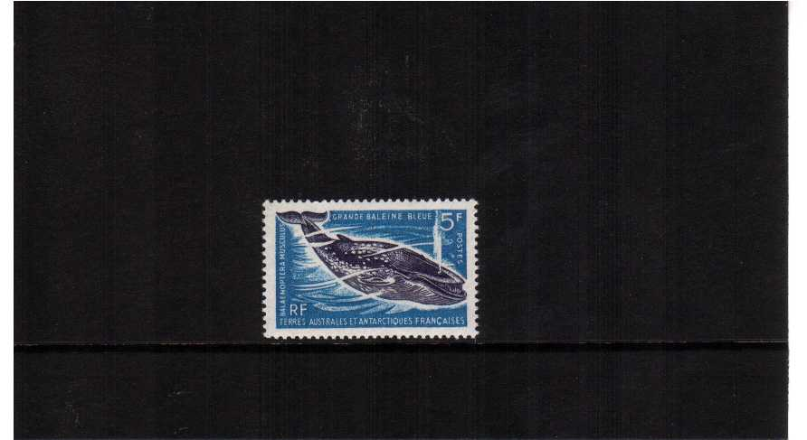 Blue Whale single superb unmounted mint